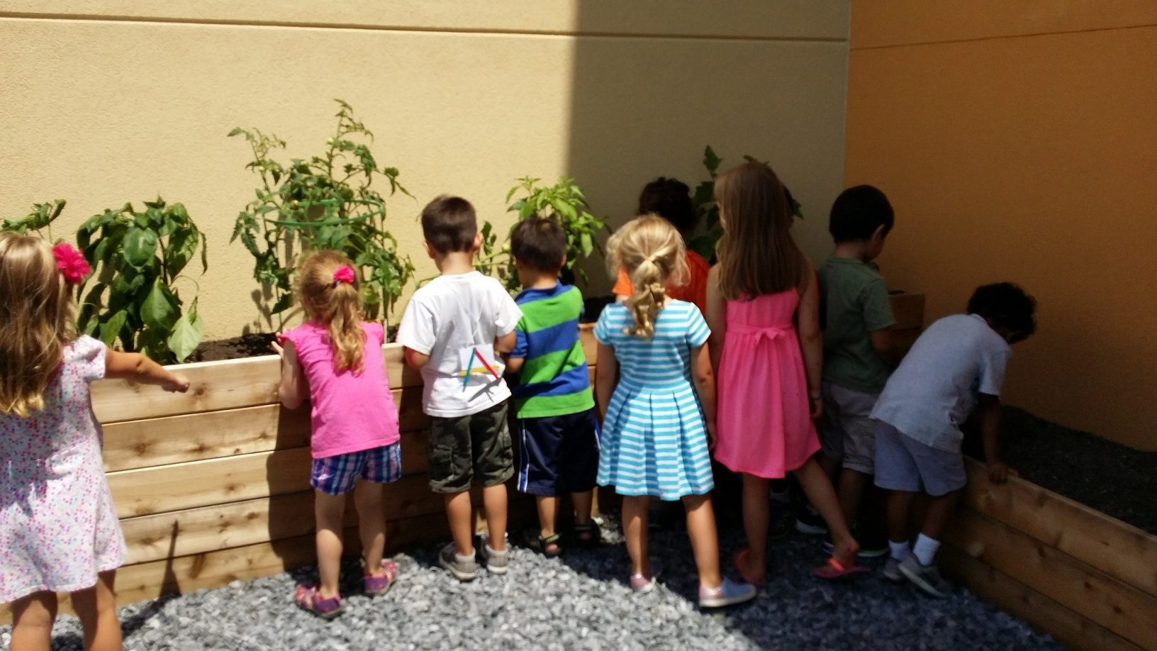 Children with tomato plants during our Gardening program
